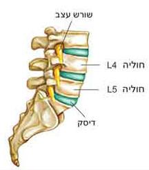 חוליות גב תחתון L4 – L5